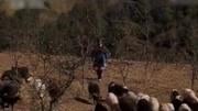 小杨创业养殖羊 全村致富喜洋洋