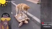 來自靈魂的拷問!王八是鱉,那烏龜是什么?