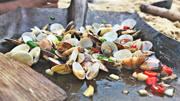 大海退潮后的文蛤有多鲜