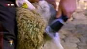 老大姐狠殺羊  …… 1695591200  換片看