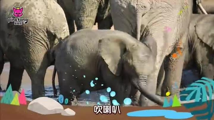 壁纸 大象 动物 720_405