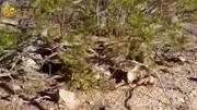 水中霸主鱷魚捕獵精彩視頻