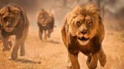 動物世界之 美洲獅捕殺猛雕