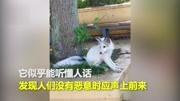 鳳九白淺齊聚武大 ?紅毛狐貍后武大又現小白狐