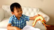 蛇捕食蜈蚣,沒腿的遇到多腿的,不料蜈蚣竟來一波反殺!