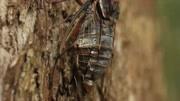 聽到蟬叫聲了嗎?#大自然的美#