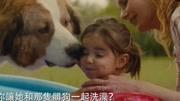 《一条狗的使命》最经典的一段,多少人看到这里泪目了!