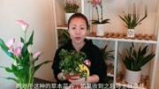 公認難養的花卉杜鵑花,記住4個小妙招,迅速爆盆花開不斷