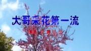 【蟲皇】蟲皇帝之昆蟲軍VS毒蟲軍 特別版