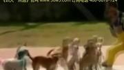 第十期 狗狗叫名字訓練