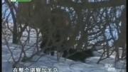 古墓麗影之崛起 西伯利亞荒野