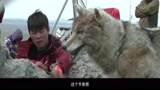 【2015大電影】《狼圖騰》制作特輯之道具篇_