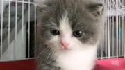 奧迪是只貓:搞笑萌寵短視頻
