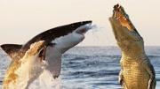 神秘海洋生物爬上陆地,上半身是大白鲨,下半身是章鱼