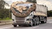 全球十大最強動物,誰才是地球上的霸王!