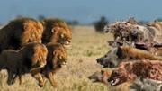 丑到令人作嘔的4大動物!簡直要被這貨給笑死了!