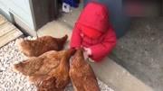 1岁女童学走路被公鸡啄伤眼球 视力恢复不乐观