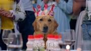 王洋 - 《神犬小七之歌》電視劇《神犬小七第三季》暖心插曲