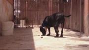 狗狗躺地上不肯起來,美女主人這樣哄狗狗,真的太溫馨了!