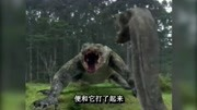 巨鱷戰狂蟒