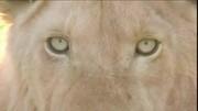加菲猫第三季:白狮一家终于团圆了,它们的大恩人是加菲猫?#22242;?#36842;