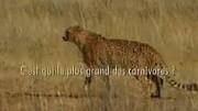 成長之重量 電影《動物世界》成長版片尾曲