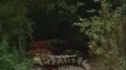 巨蟒大戰恐鱷 美女警察VS金發辣妹 打架