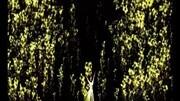 【洛天依原创】月影灯华【南北组】【抹茶丸】【Feat.乐正绫