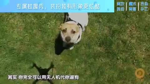 ng狗性交_壁纸 动物 狗 狗狗 480_270
