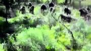 動物世界 預告片1:終極版