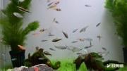彩绘雁鱼铜灯——西汉环保的黑科技