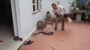 农民田地里挖出巨蛇, 结果......