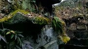 湖南長沙一處清朝古墓,打開棺材后考古隊尷尬了:這是我的祖墳