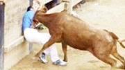 """富豪102萬買一頭牛,牛名霸氣叫""""擎天柱"""",是中國最兇悍的斗牛"""