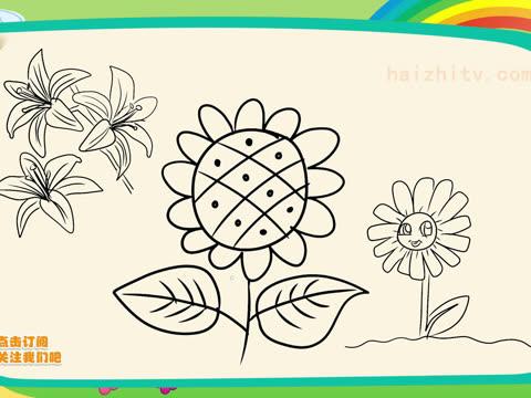 海知植物花卉简笔画,八种常见植物画法视频合集