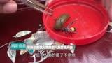 这只大黄蜂太厉害了!竟然和水蛭打起来,镜头拍下全过程!