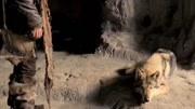 動物是人類的朋友,杜絕非法捕獵。這次帶來一款禁止毛皮妝,希望