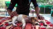 泰迪躺在地上裝死,姥姥狠狠踹了三腳,狗狗的反應亮了!