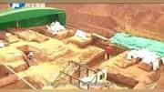 施工員意外發現千年古墓,棺材中女尸的動作把工人給嚇懵了