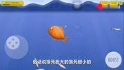 大魚吃小魚:我是一條小金魚,我把大虎鯨吞到肚子里