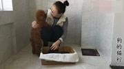 农村狗市上一条大的黑狼犬,买家给6000块钱都不卖,能值多少钱