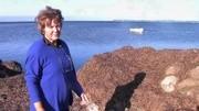 珍藏版水彩画教程:伊丽莎白泰勒的《薰衣草》