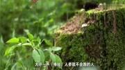 【世界異聞錄】實拍響尾蛇的尾巴里有什么