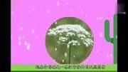 老中醫:農村這一野草常用它泡水喝,血管通暢不得癌,一生不受感冒困擾