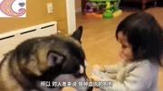 狗的忠誠果然是不可質疑的,小狗為就主人,竟去和蟒蛇戰斗