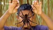 世界六大最毒蜘蛛排行榜!最后一種毒液按秒殺人!