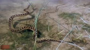 公蛇求爱母蛇被拒,母蛇下场竟然那么惨!
