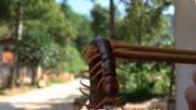 世界最長蜈蚣竟活吞毒蛇