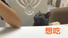 哥哥干亚洲性爱吧图片_萌猫宝哥哥