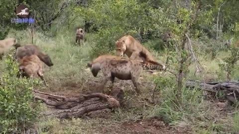 疯狂的动物世界